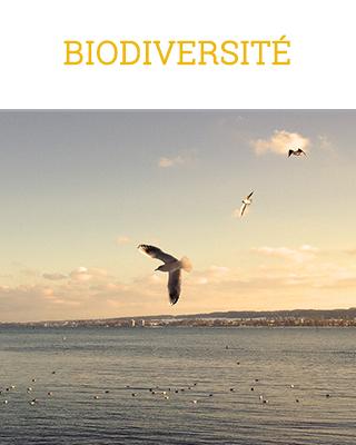 cover catégorie biodiversité