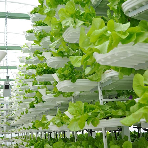 les fermes verticales, nouvelle tendance de l'agriculture urbaine