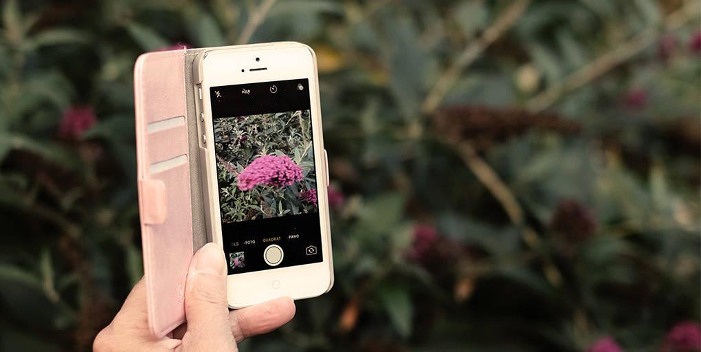 Les applications mobiles peuvent aider à mieux connaître la biodiversité