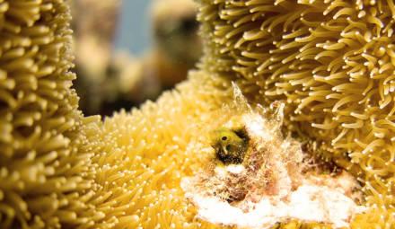 les récifs coralliens abritent une biodiversité marine sans égal