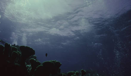 la pollution des océans est aggravée par les crèmes solaires