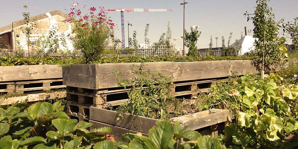 un potager en ville comme exemple de l'agriculture urbaine