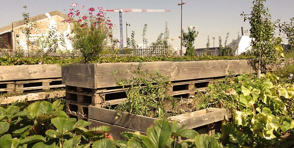 les jardins partagés sont un exemple de l'agriculture urbaine