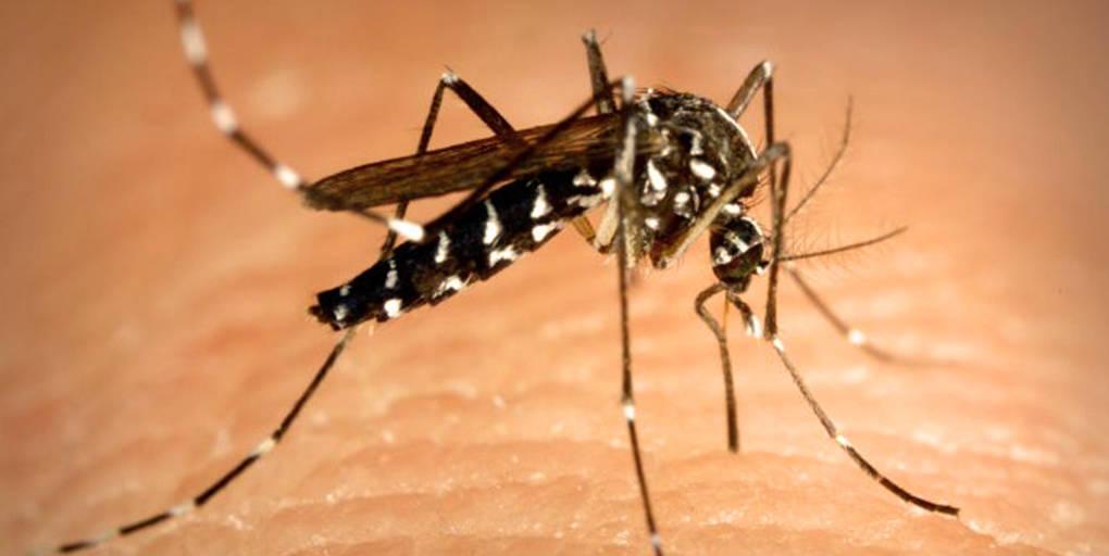 le moustique tigre est un danger sanitaire