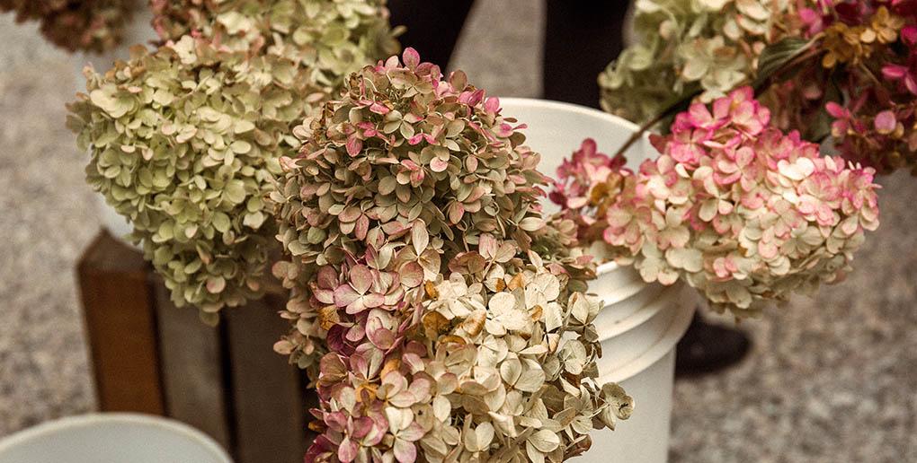 La vente de fleurs en circuit-court pourrait sauver l'horticulture française