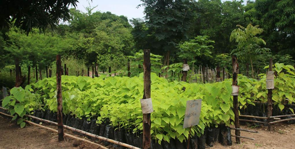 Des arbres prêt à être plantés à Madagascar grâce à Ecosia