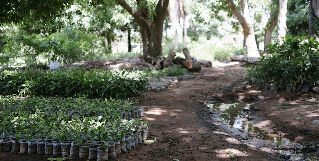1 millions d'arbres plantés grâce à Ecosia en août 2018