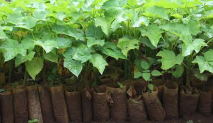 la start-up ecosia lutte contre la déforestation