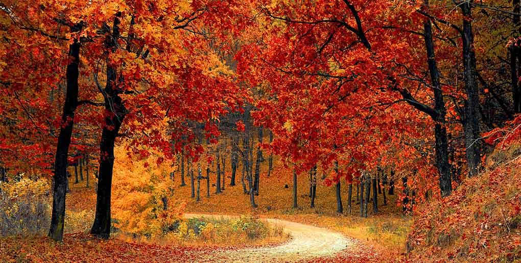 la forêt peut être un actif rentable, selon la start-up ecotree