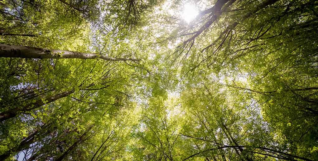 EcoTree participe à la lutte contre le dérèglement climatique en reboisant la France
