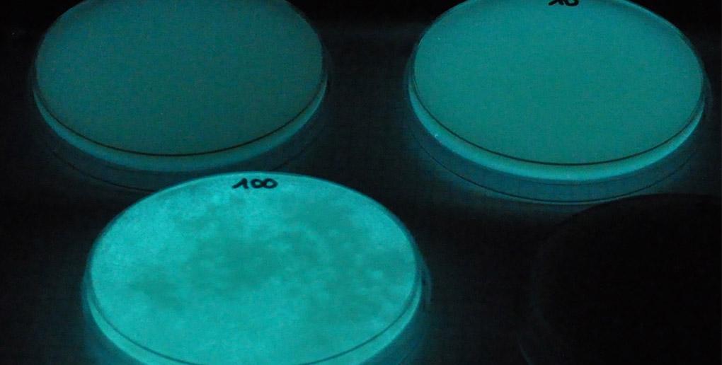 La lumière produite par la start-up Glowee provient de bactéries.