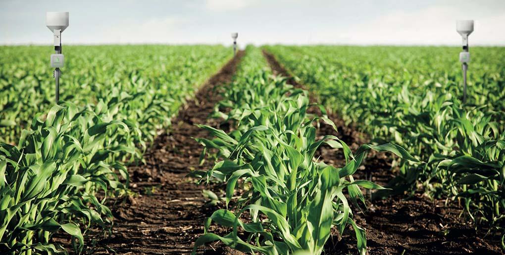weenat propose des solutions d'agriculture de précision