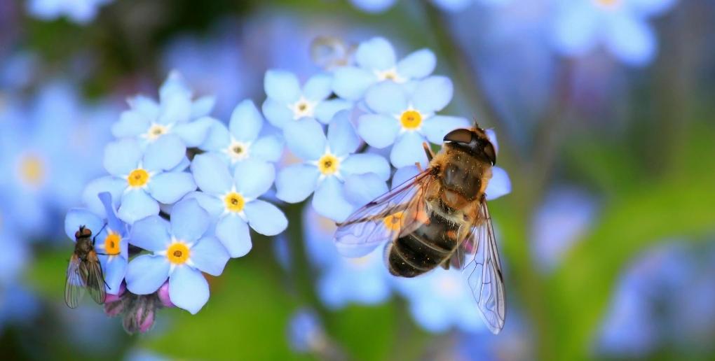 la ruche intelligente beelife protège les abeilles