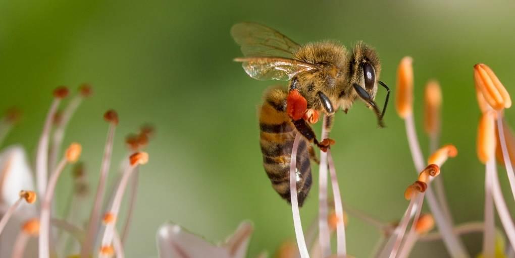 les néonicotinoides tuent les abeilles