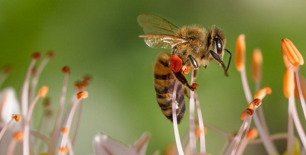 une abeille sur une fleur