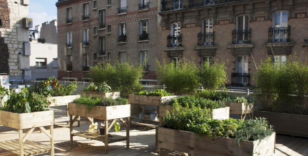 l'agriculture urbaine permet le développement de l'agroecologie