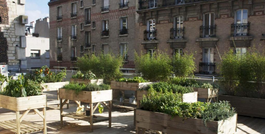 merci raymond travaille à végétaliser les villes