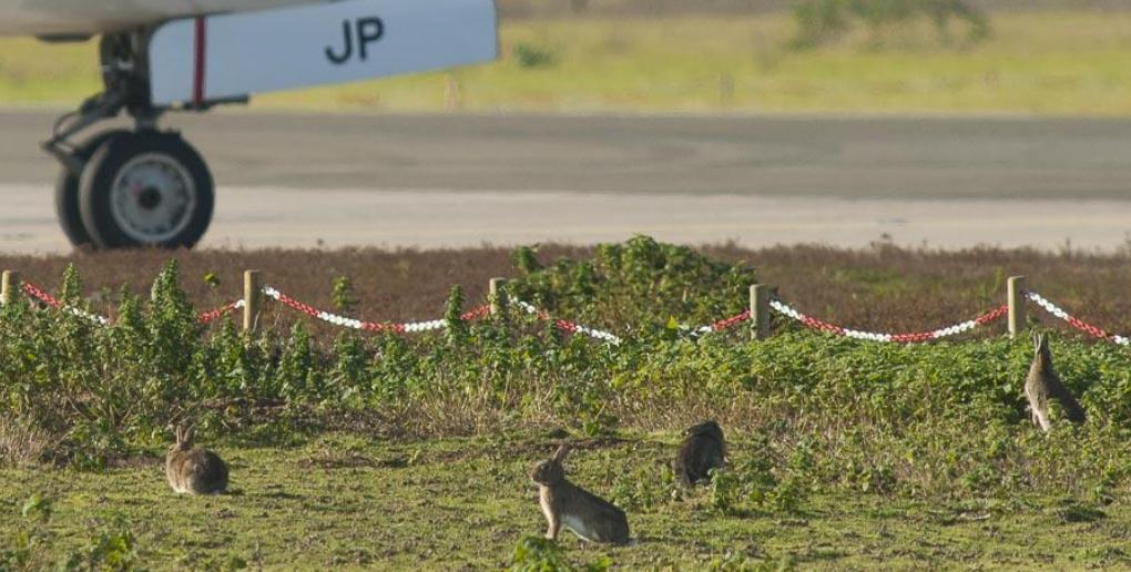 les aéroports abritent la biodiversité
