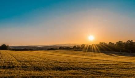 champ de blé sous le soleil