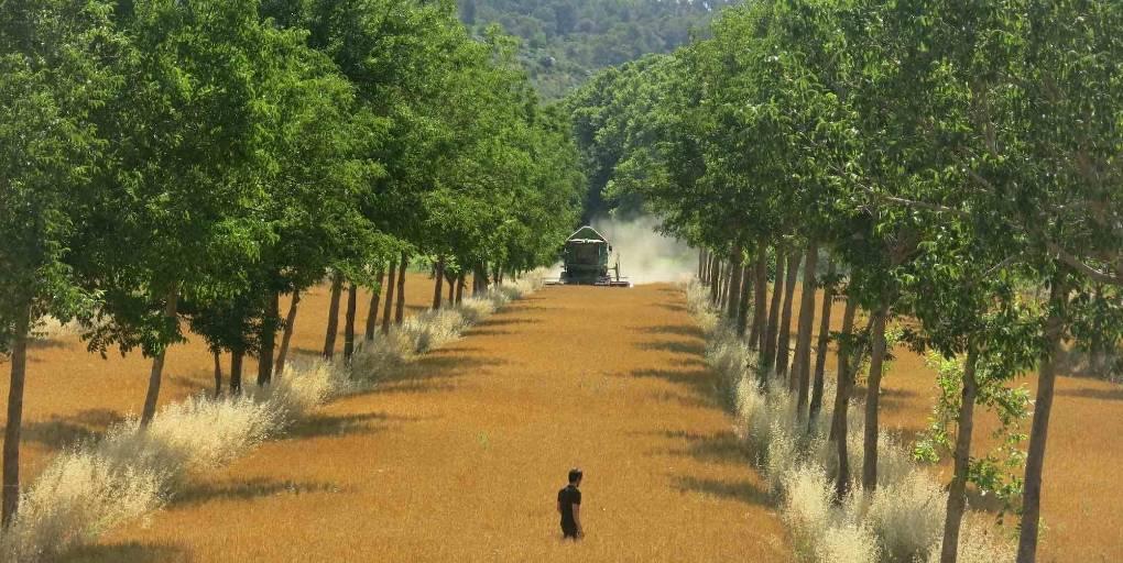 un exemple d'agroforesterie