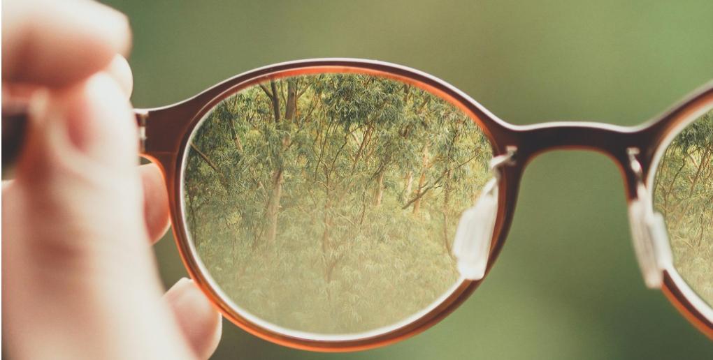 des arbres à travers des lunetttes