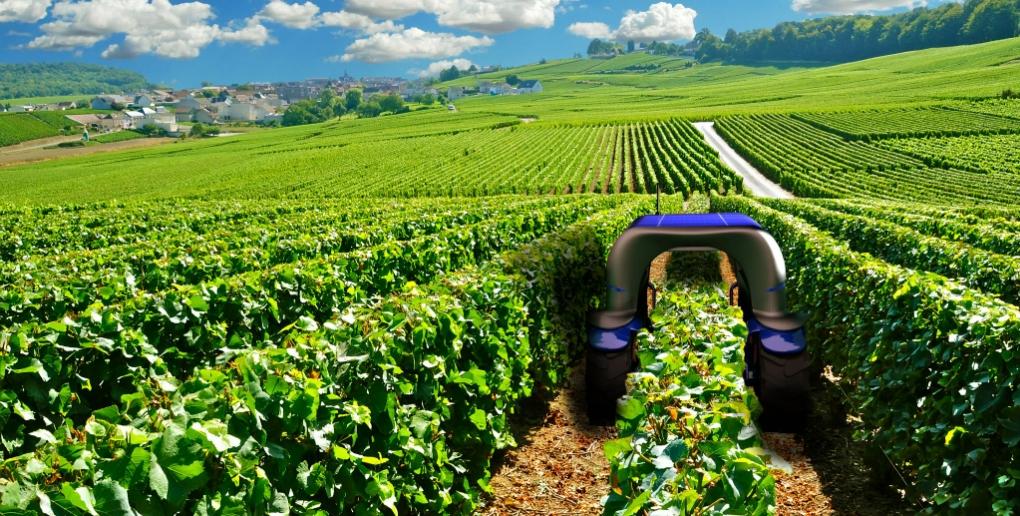 Bakus robot viticols