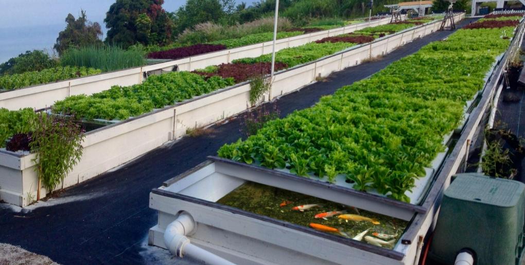 technique aquaponie agriculture urbaine