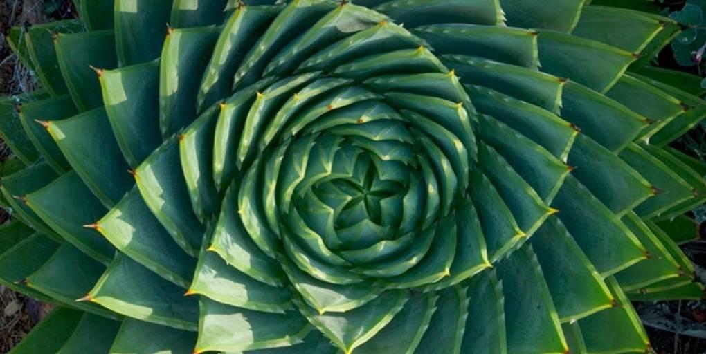 une plante grasse