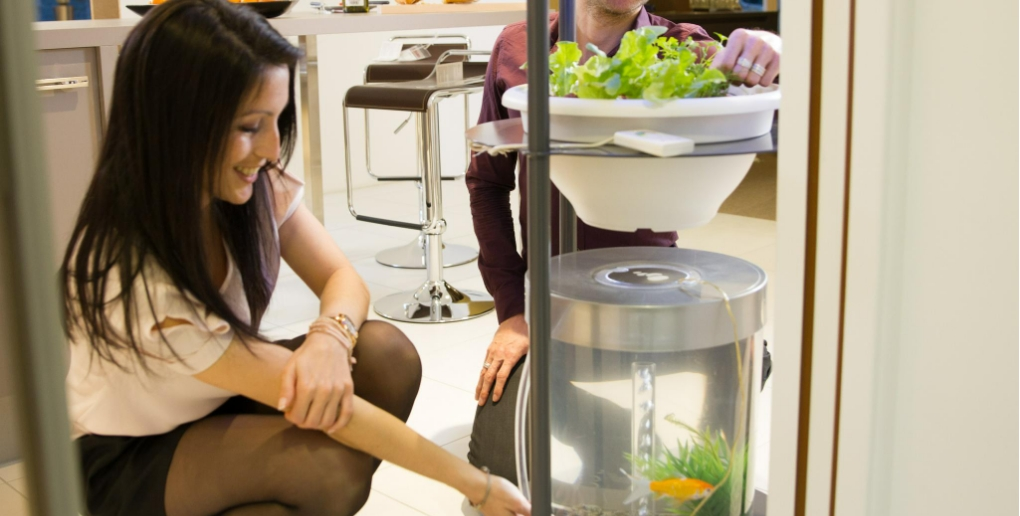 système aquaponique développé par Urban Leaf