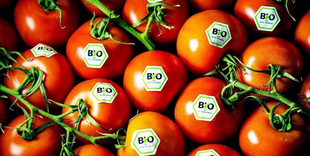 tomates bio