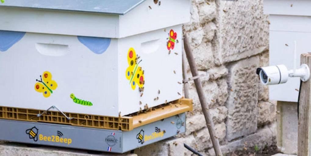 balance Bee2Beep ruche