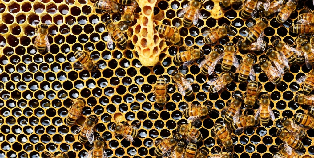 abeilles ruche miel