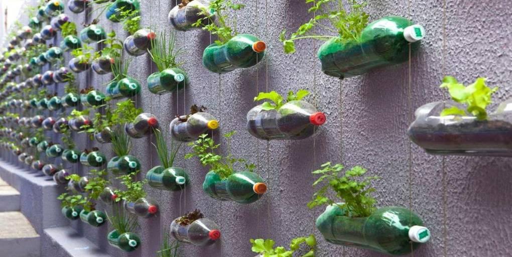 mur végétal bouteilles recyclées