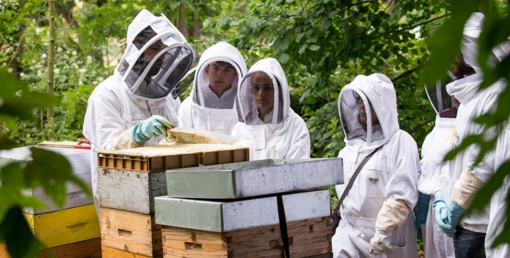 formation apiculture happyculteur