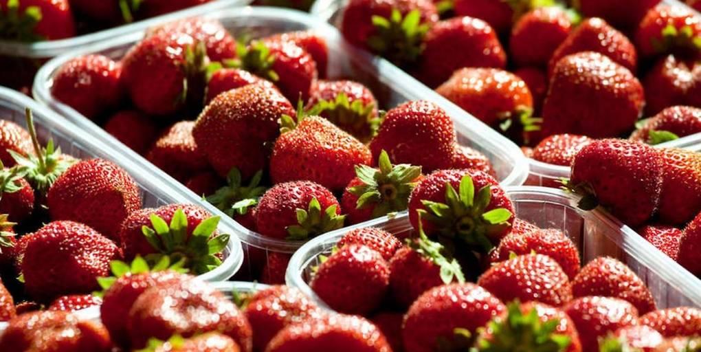 barquettes de fraises bio