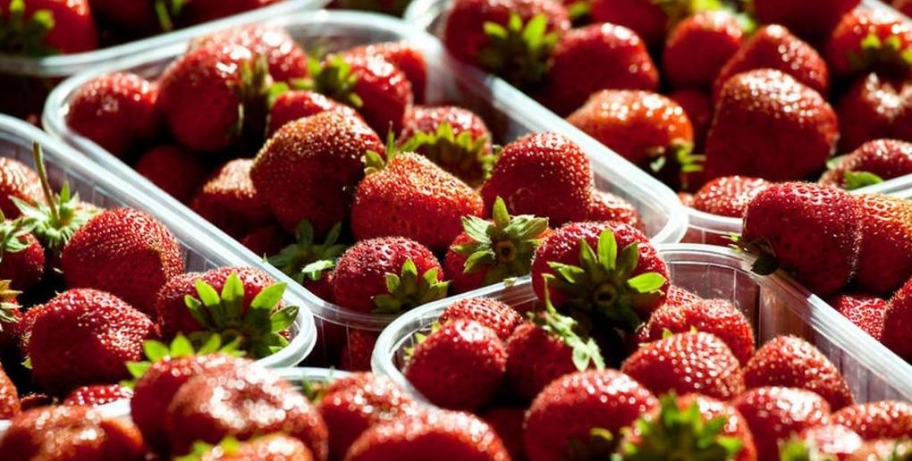 barquettes de fraises