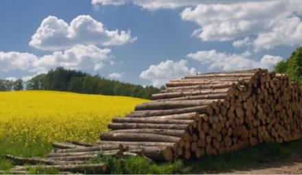 la filière biomasse énergie ou bioénergie se développe en France