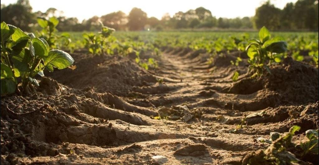 Biomede extraction par les plantes des métaux lourds des sols agricoles