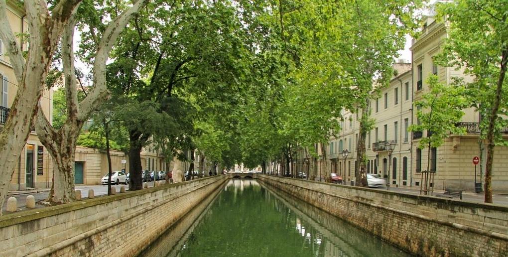 arbres rue Nîmes