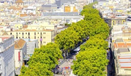 arbres villes