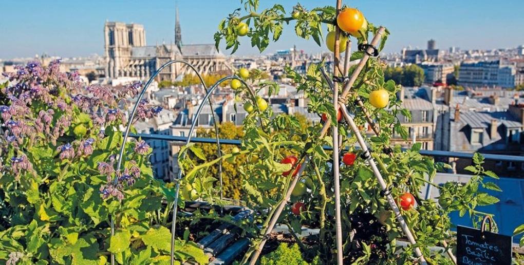 agriculture urbaine paris