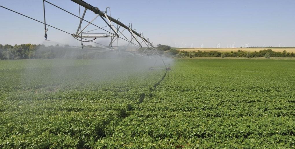 irrigation champ