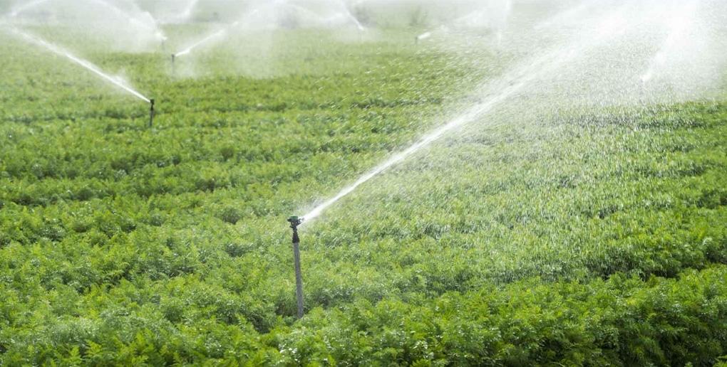 système d'irrigation dans un champ