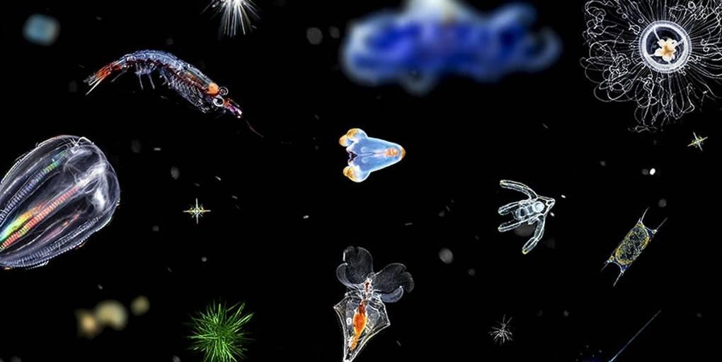 échantillons de plancton