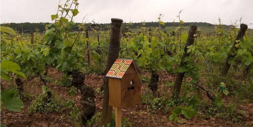 Deaverde viticulture