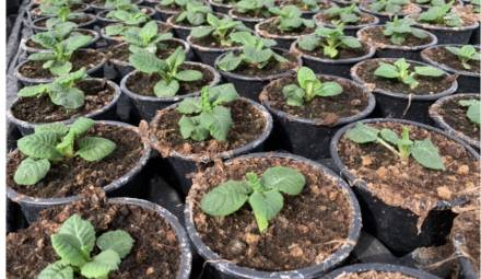 plantes agriculture