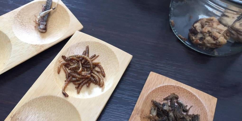 insectes comestibles