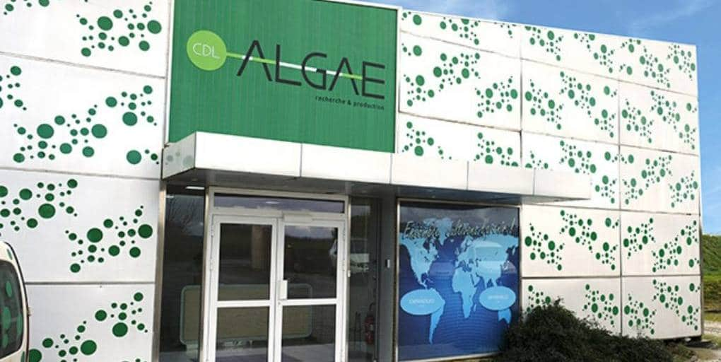 LLDC algae