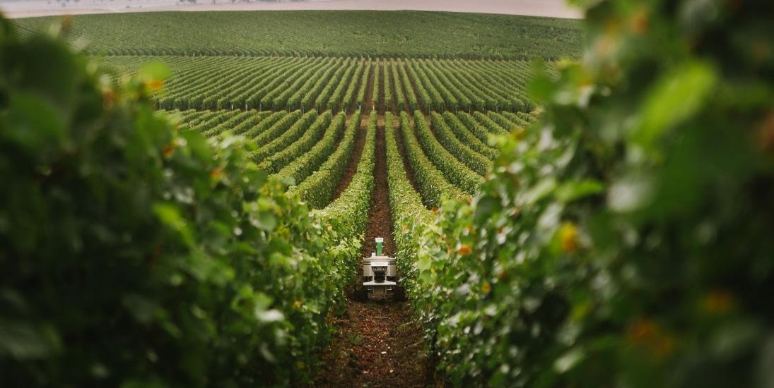 robot viticulture vignes