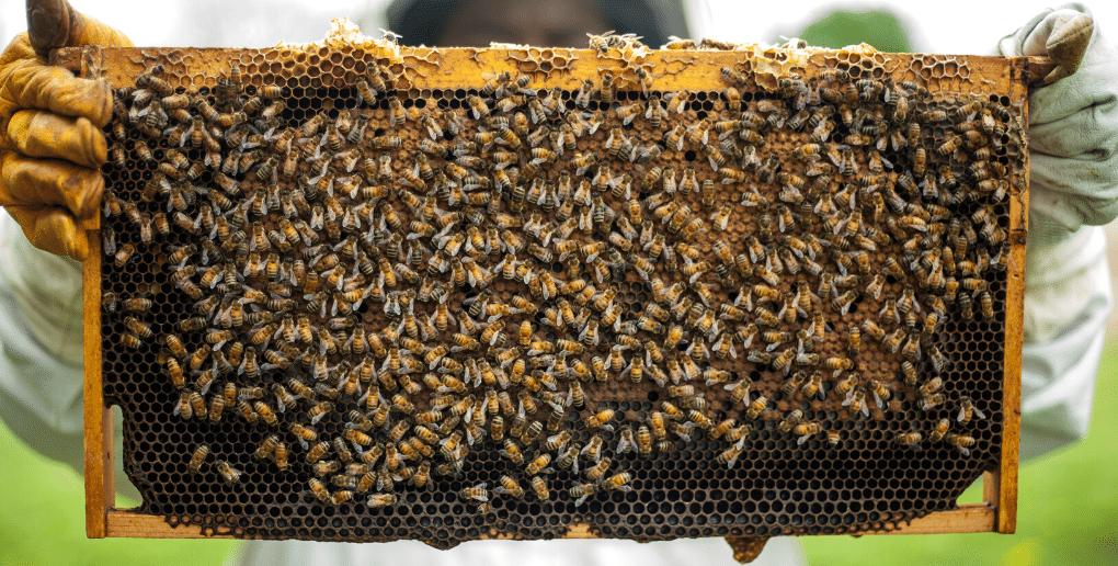 Ruche d'abeille BeeGuard